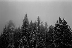 California Wes Sumner #white #dream #black #photography #and #trees