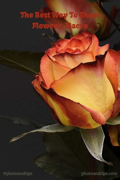 Flower Photography Tips Macro