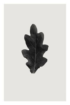 """Saatchi Art Artist Anders Bundgaard; Photography, """"Oak"""" #art"""