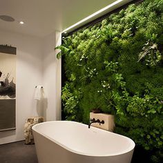 Moss Wall In Bathroom #house #bathroom #plant #wall #green