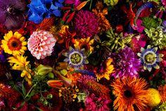 Makoto Azuma 7 #azuma #makoto #design #nature #flower #colourfull