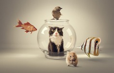 Curiosity killed the cat by mauro mondin #cat #fish #mouse #animals #humor #compositing #surreal #photomanipulation #photoshop