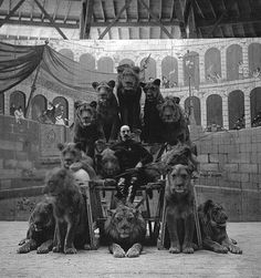 Tumblr #lions #black #white #circus