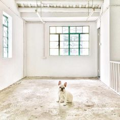 Minimal Pup Instagram Account: Tiny Pups in Big Places