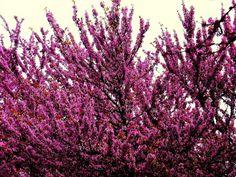 tumblr_m60d0zDNlK1qmkhkyo1_1280.jpg 1.280×960 pixel #giudas #tree