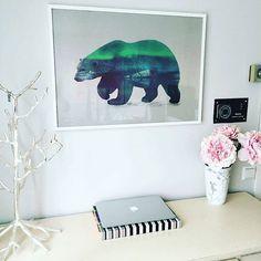 composite, collage, polar bear, desk, office space