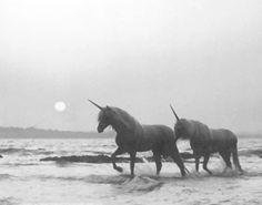 tumblr_lful1ydJHO1qddjelo1_500.jpg (500×394) #unicorn