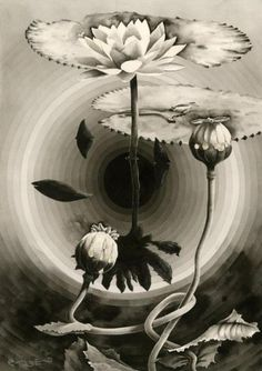 Chimes&Rhymes | innovative design and new techniques in visual artistry #drawing #botanic