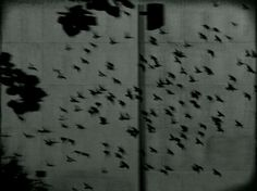 Le Tourbillon, Artwork by Lucie Souslapluie #birds