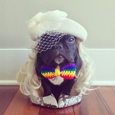 CJWHO ™ (Meet Trotter: The French Bulldog That's a Master...) #disguise #instagram #trotter #design #cute #master #puppy #french #animals #fashion #bulldog #dog