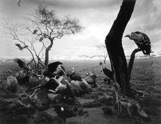 PORT - Portland art + news + reviews #buzzards