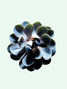 James Day Plant #james #photography #day #still #life #plant