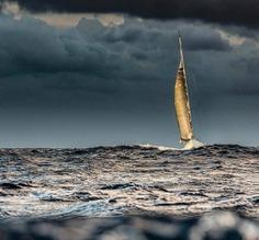 A razão e a paixão são o timão e a vela … de nossa alma navegante. Khalil Gibran