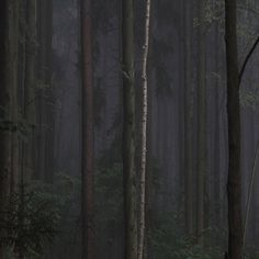 FFFFOUND! #trunk #photography #forest #dark #leaves