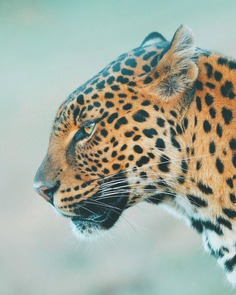 Outstanding Wildlife and Adventure Photography by Charly Savely