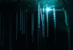 CJWHO ™ (Luminescent Glowworms Illuminate Caves in New...)