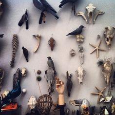 Nanó #mori #skeleton #memento #museum #exhibition #birds #kolumba #skull #bones