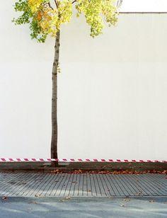  CarlesPalacio Photography  #white #blanco #tree #arbol #pared #wall #arbre #blanc