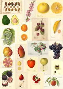 Fruit_watercolors