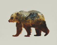 bear, photography, canada, british columbia, patagonia, jumbo resort, illustration, composite