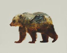 bear, photography, canada, british columbia, patagonia, jumbo resort, illustration, composite