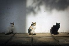 Ania Vouloudi #photography #cats