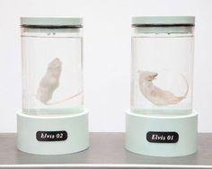koby barhad clones mice with elvis presley's DNA #elvis