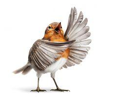 115 Best Bird Illustration Design Inspiration at DzineBlog.com - Design Blog & Inspiration #photograph #bird