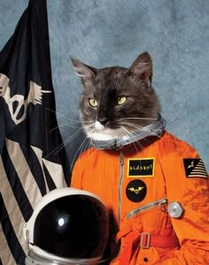 Cat in Space #awesome #cat #space