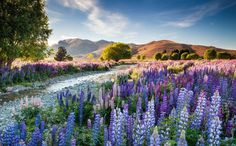 Winners of The International Garden Photographer of The Year