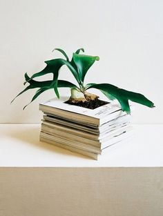 today and tomorrow #books #plant