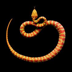 Snake #photography #snake