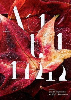 Four Seasons Typographic Posters #typographic #posters #seasons