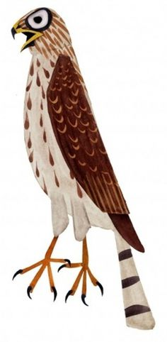 Brendan Wenzel → COOPER'S HAWK #illustration #bird