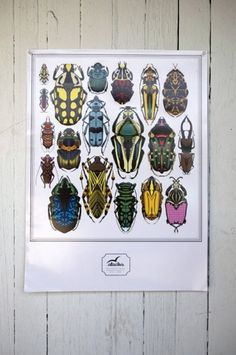 beetleposter.jpg 485×730 pixels #stacks #insects #poster