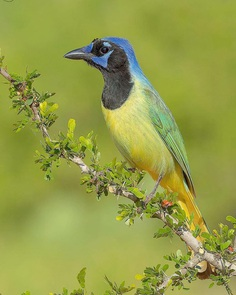 #your_best_birds: Fantastic Bird Photography by Abinash Dhal