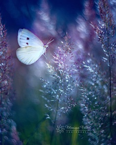 Beautiful Macro Photos of Flowers and Butterflies by Monique Felber
