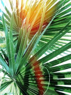 Merde! - Présenter, avec Petit-Maître (2011) #photography #palm #tree