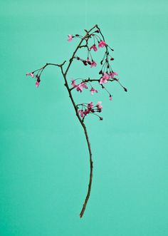 Blossom by Raw Color | PICDIT #green #photo #color #photography #colour #plant