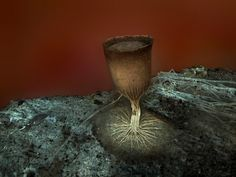 Extraordinary Microscope Photographs - The Big Picture - Boston.com #photography #microscope
