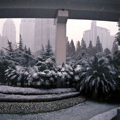 project, cina. alberto sinigaglia photographer. #snow #street #city #plants #china