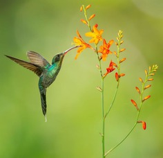 #nuts_about_birds: The Magnificent Birds of Costa Rica by Jalil El Harrar