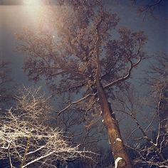 Isabelle Alexandra Ricq #night #trees #snow #sky