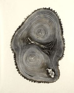 bryan_nash_gill_01.jpg (946×1200) #woodcut #trunk