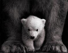 Miss M's #wild #cub #pretty #beaty #cute #bear