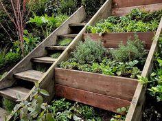 http://theyardpdx.tumblr.com/post/22234190406 #plants