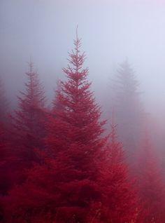 FFFFOUND! | tumblr_l7xzd2AAWU1qzs9ggo1_1280.jpg 759×1024 pixels #mist #photography #red #tree