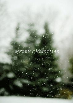 Merry Christmas #christmas #snow #photo #blur #tree #type on photo