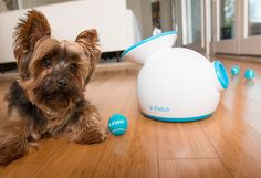 To keep your pet busy, try iFetch, fetching ball fun for pets — they will simply leave you alone for a while! #lifestyle #design #dogs #product #industrial #pets #fun