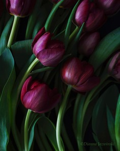 Absolutely Delightful Flowers Photography by Dianna Jazwinski